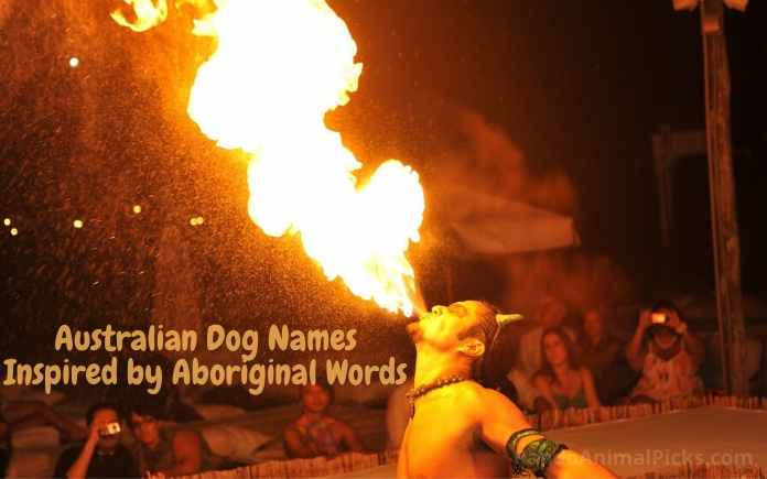 Australian Dog Names Inspired by Aboriginal Words