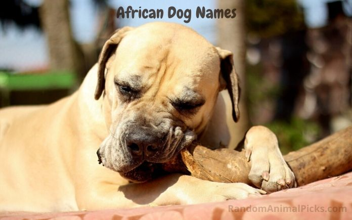 African Dog Names main image