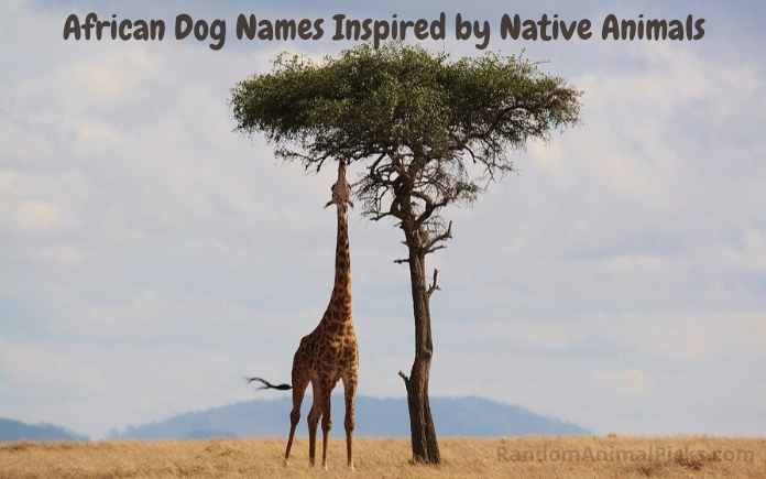 African native animals