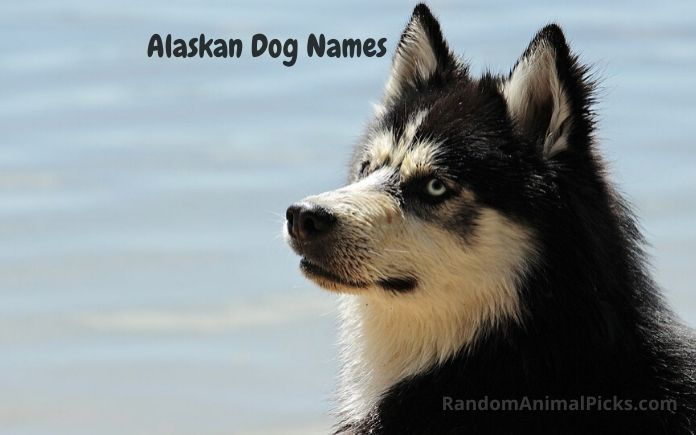 Alaskan Dog Names main image