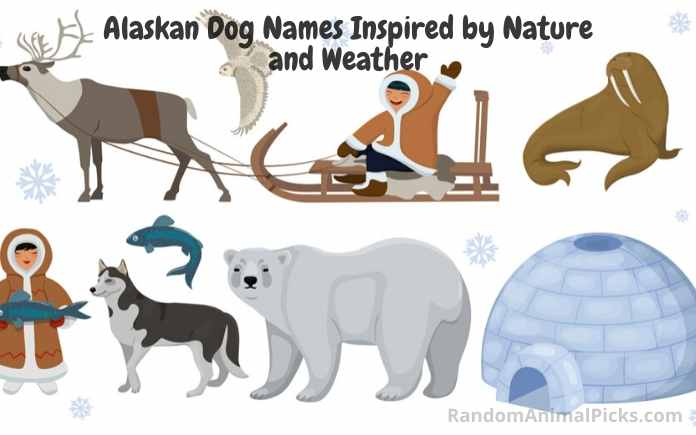 Alaskan native animals