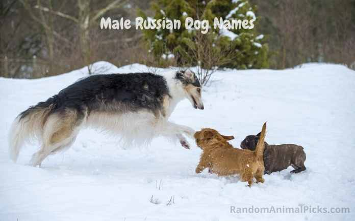 Male Russian Dog Names