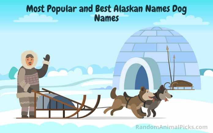 Most Popular and Best Alaskan Dog Names