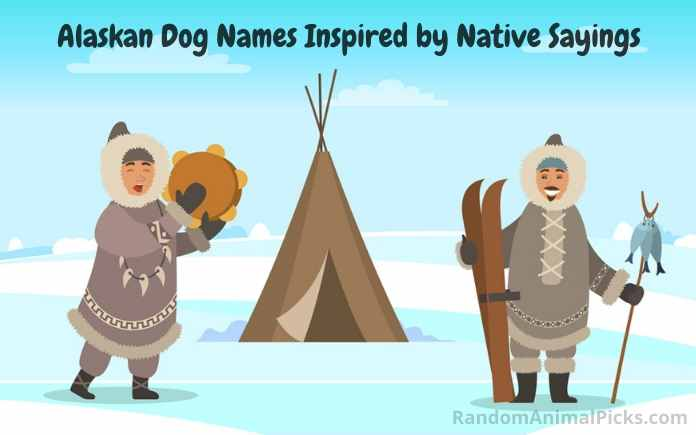 Alaskan sayings inspired Alaskan dog names