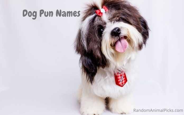 Dog Pun Names