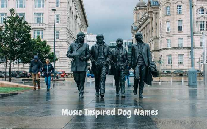 Cool Music Inspired Dog Names