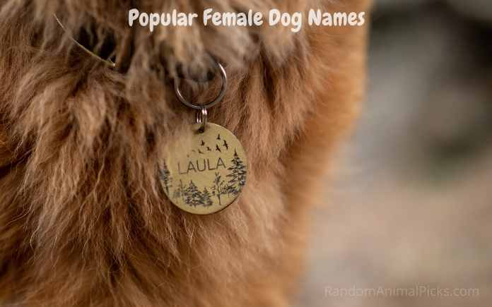 Popular female Dog Names