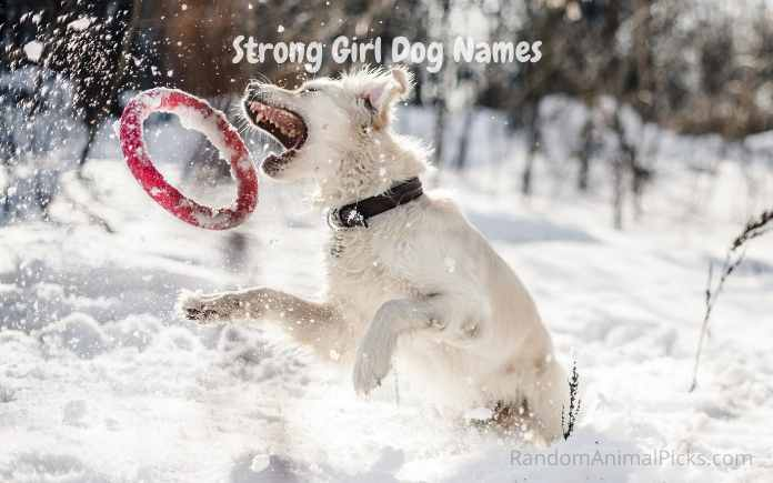 Strong Girl Dog Names