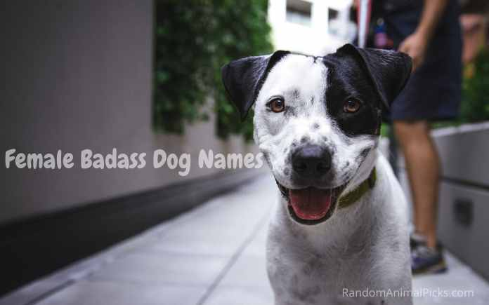 dog names inspired by fighter names